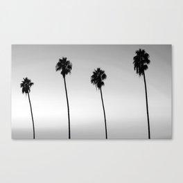 Black and White San Diego Palms - California Canvas Print