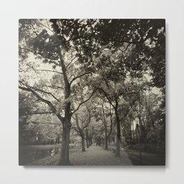 Autumn Avenue Metal Print