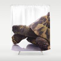 tortoise Shower Curtains featuring Greek land tortoise by AvHeertum