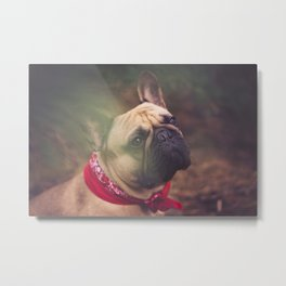 Lenny the Frenchie Metal Print