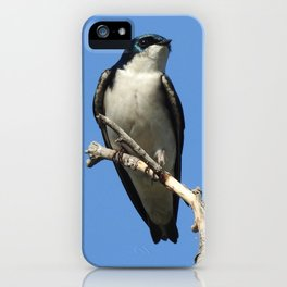 Male Tree Swallow iPhone Case