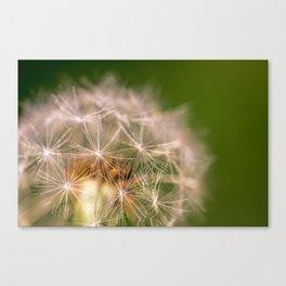Snowglobe - Macro Photograph of Dandelion Canvas Print