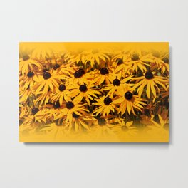 A Bed of Bloomin' Rudbeckias Metal Print