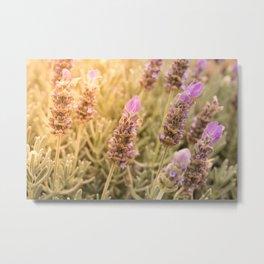 Lavender and Sunshine Metal Print
