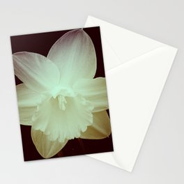 Daffodil 3 Stationery Cards