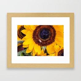 Sunflower bee Framed Art Print