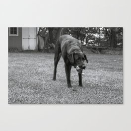 Play Dog Canvas Print