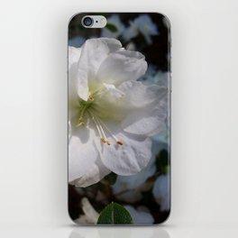 Joyful Camellias iPhone Skin