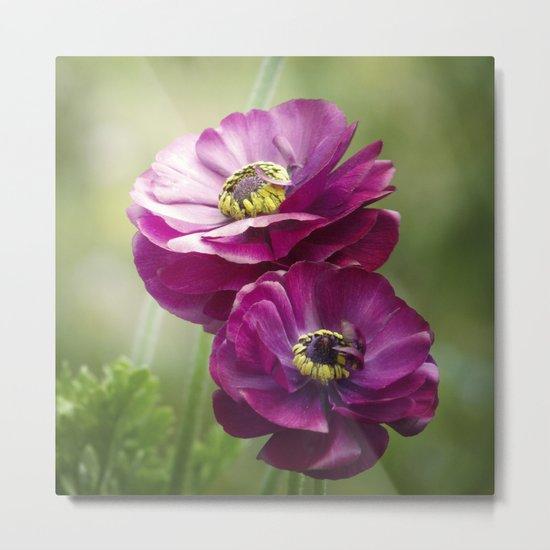 Spring Botanical -- Garden Ranunculus Metal Print