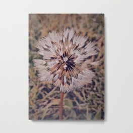 Dew On Dandelion Metal Print