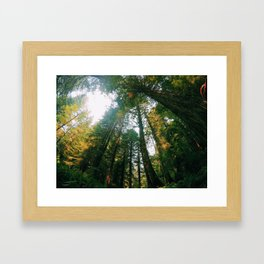 If Trees Could Talk Framed Art Print