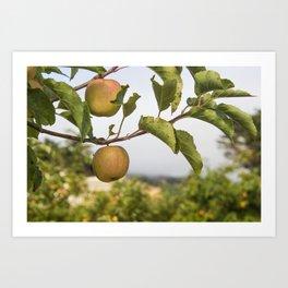 Apples on a Tree Art Print