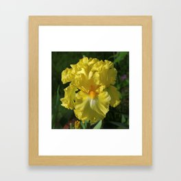 Golden Iris flower - 'Power of One' Framed Art Print