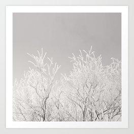 Winter branches Art Print