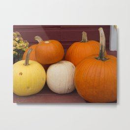 Freshly picked assortment of fall pumpkins, gourds, Autumn Decorations Metal Print