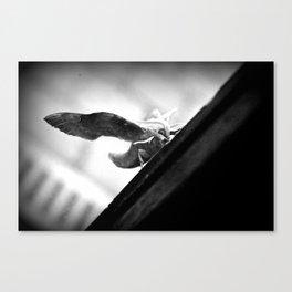 Poplar Hawk moth Canvas Print