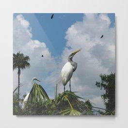 Dino Bird Metal Print