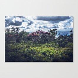 rhode Canvas Print