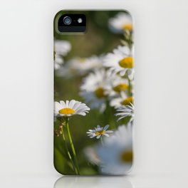 Daisies meadow in the summer iPhone Case