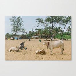BEACH COWS Canvas Print