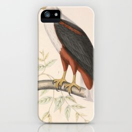 Haliaeetus vocifer 1849 iPhone Case