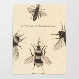 Naturalist Bees Poster