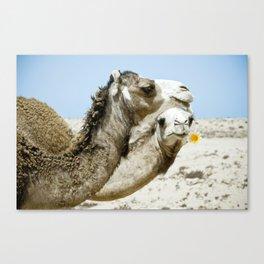 Daisy Camel Canvas Print
