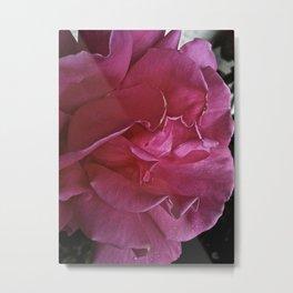 Rose HD Metal Print