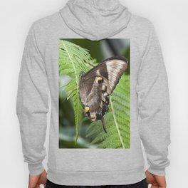 Ulysses  Butterfly Hoody