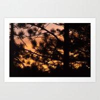 Sunset Between The Trees Art Print