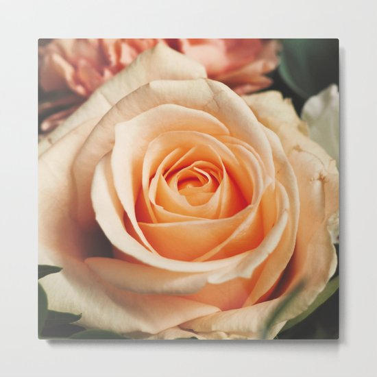 Romantic Rose Pink Rose Metal Print