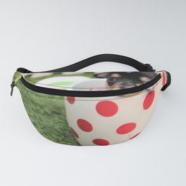 Chihuahua Puppy in a Teacup Fanny Pack