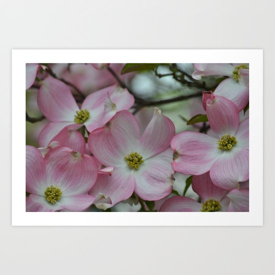 Pink Dogwood Flowers Art Print