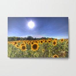 Sunflowers Of Summer Metal Print