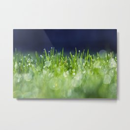morning yard Metal Print