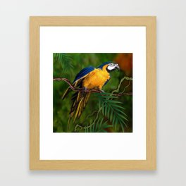 BLUE-GOLD MACAW PARROT IN JUNGLE Framed Art Print