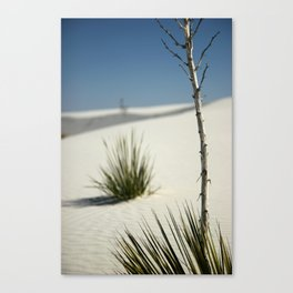 White Sands, March 2007 Canvas Print