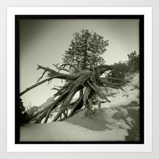 Tree at Tent Rocks Art Print