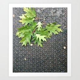 Oak Leaves on Metal Art Print