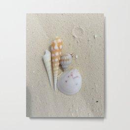 Shells and hidden crabs Metal Print