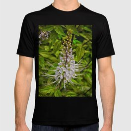 Cats Whiskers flower T-shirt