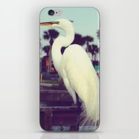 crane iPhone & iPod Skins featuring Crane by Haily Melendez