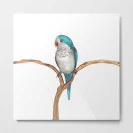 Blue quaker parrot watercolor Metal Print