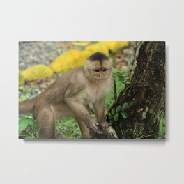 Monkey in a Park Metal Print