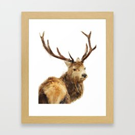 Winter Red Deer Framed Art Print