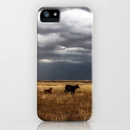 Life on the Plains - Cow Watches Over Playful Calf in Oklahoma iPhone Case