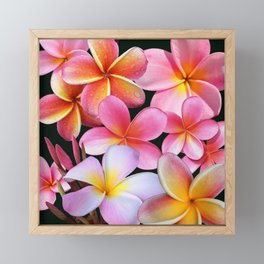 Pink Plumerias Framed Mini Art Print