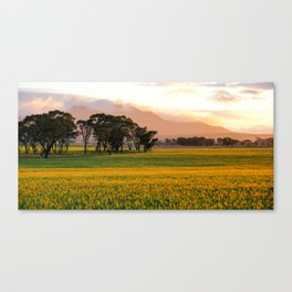 Sunset on the Stirling Ranges, Western Australia Canvas Print