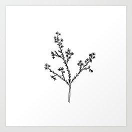Wildflower in the Meadow Art Print