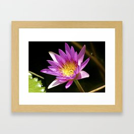 Pink Waterlily - Vizcaya Framed Art Print